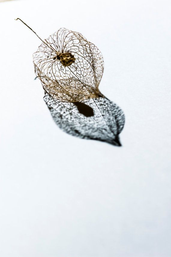 Seed Cages 4 - Fine Art Photography - Wall Décor - Nature Photography