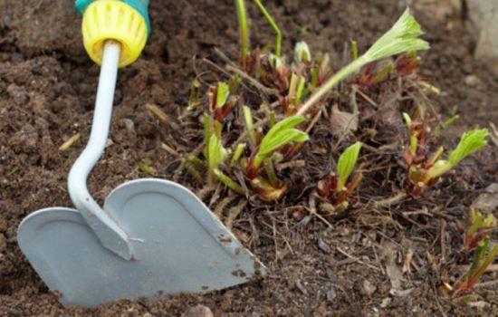 Клубника: подкормка ранней весной, нужна или нет, чем подкормить