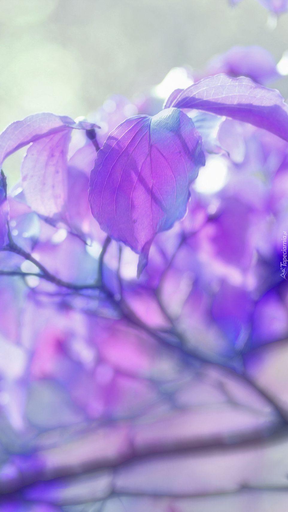 Fioletowe Liscie W Rozmyciu Haha Plants Purple