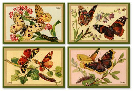 Butterfly Set 3