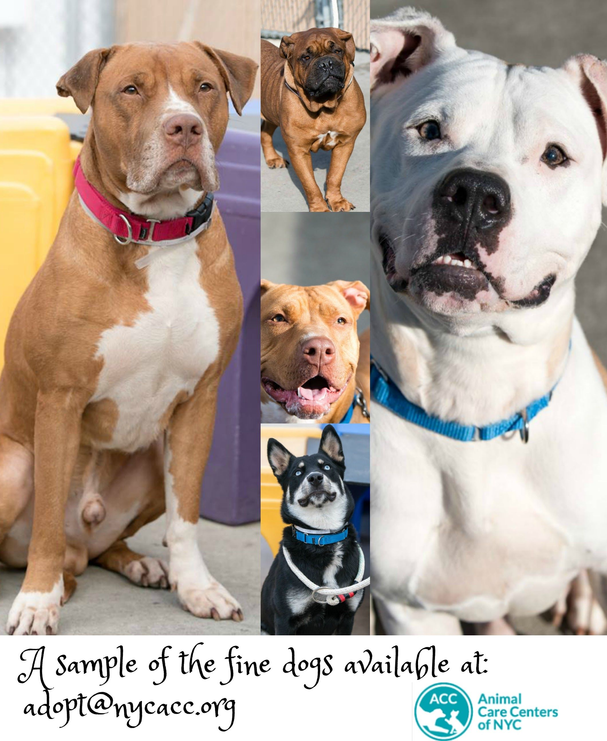 Pin By Betty Nerren On Shelter Rescue Animals Pet Adoption