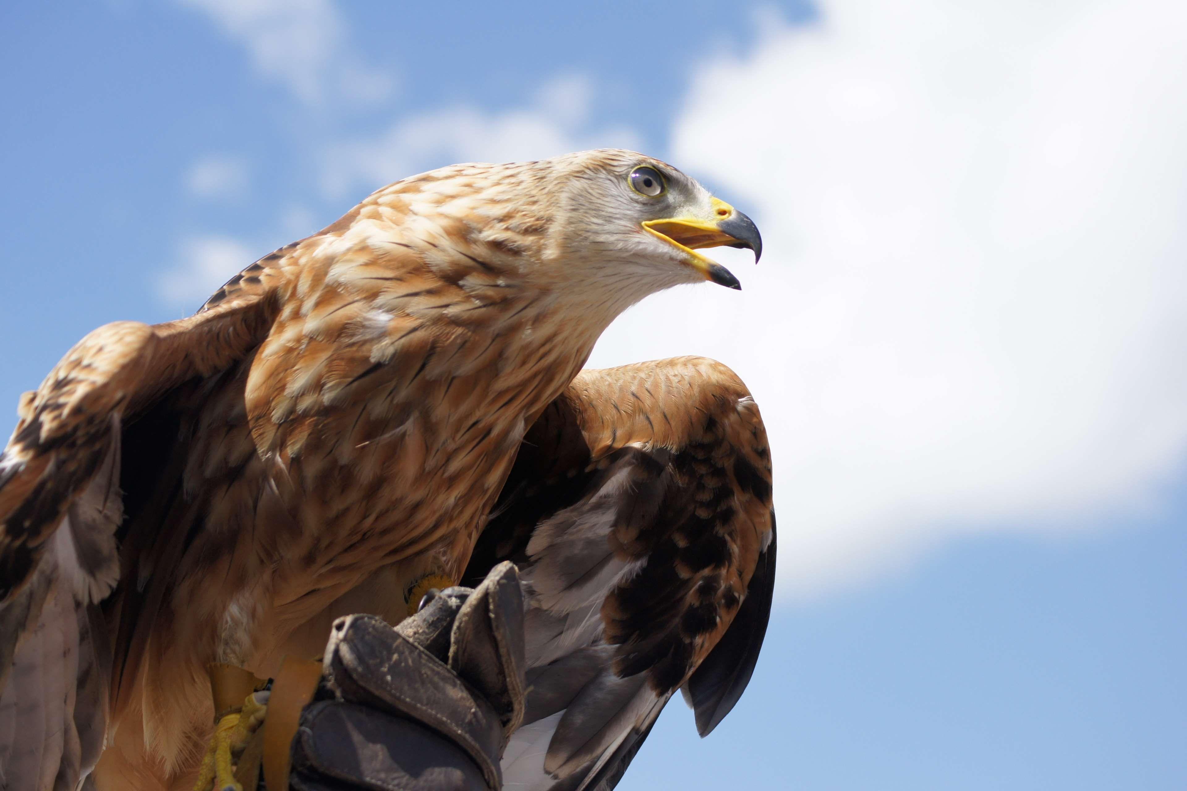Обои eagle, beak, the, клюв, winter. Животные foto 11