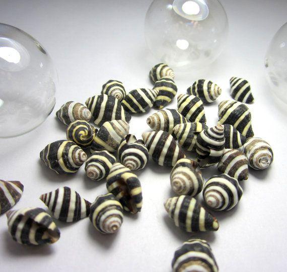 Shells for Beach Decor - Nautical Decor Beehive Shells, Black & White Striped, 12pc