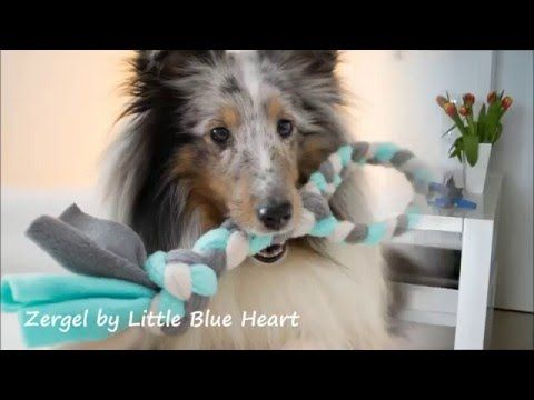 Diy Fleece Zergel Youtube Dog Games Dogs Dog Crafts