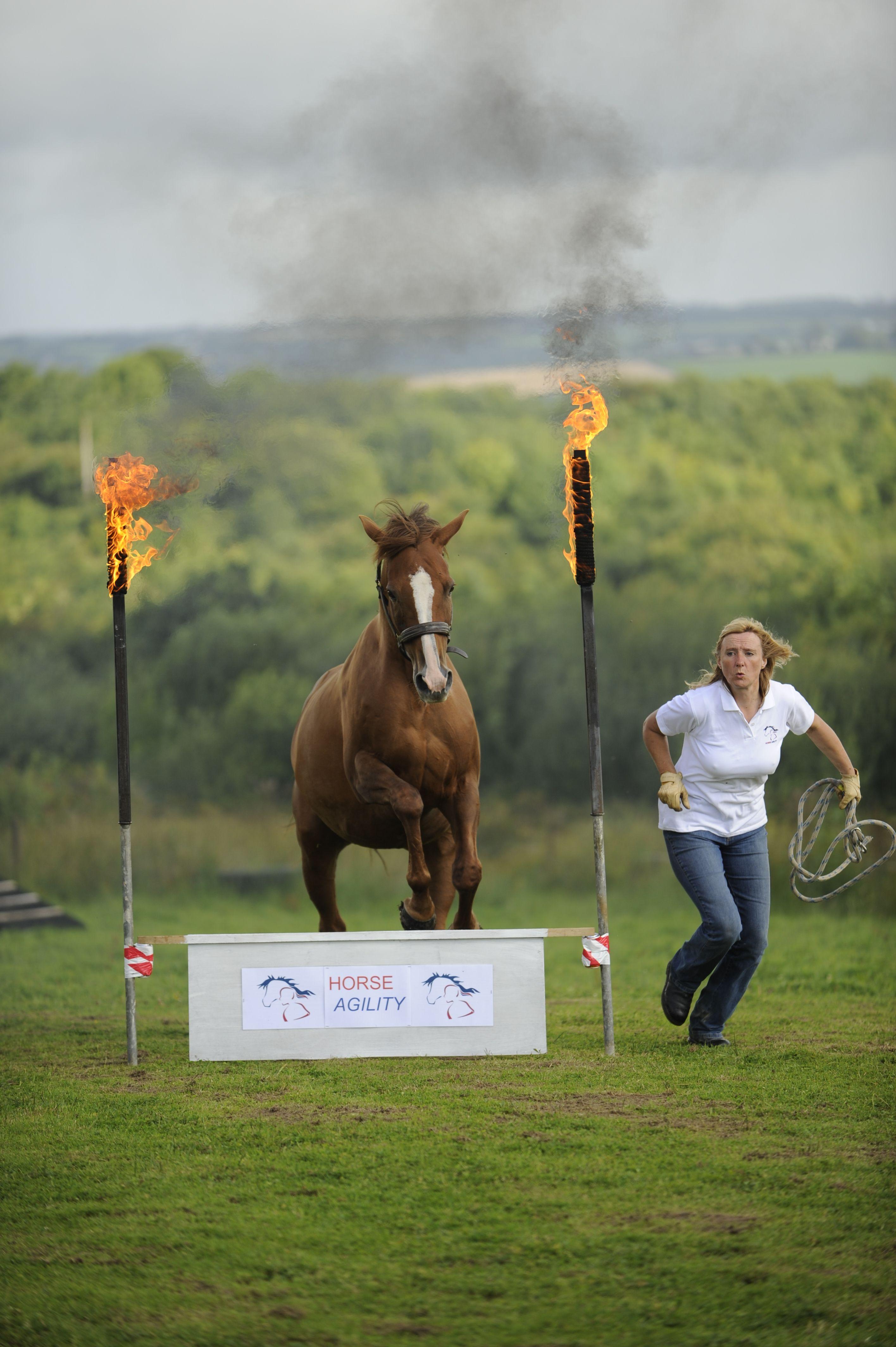 doma libre ejercicios para caballos de recreo
