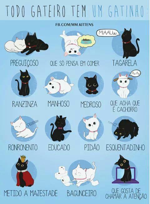 Personalidade do gatinho.