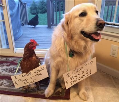 Pin On Funny Animals Pet Shame