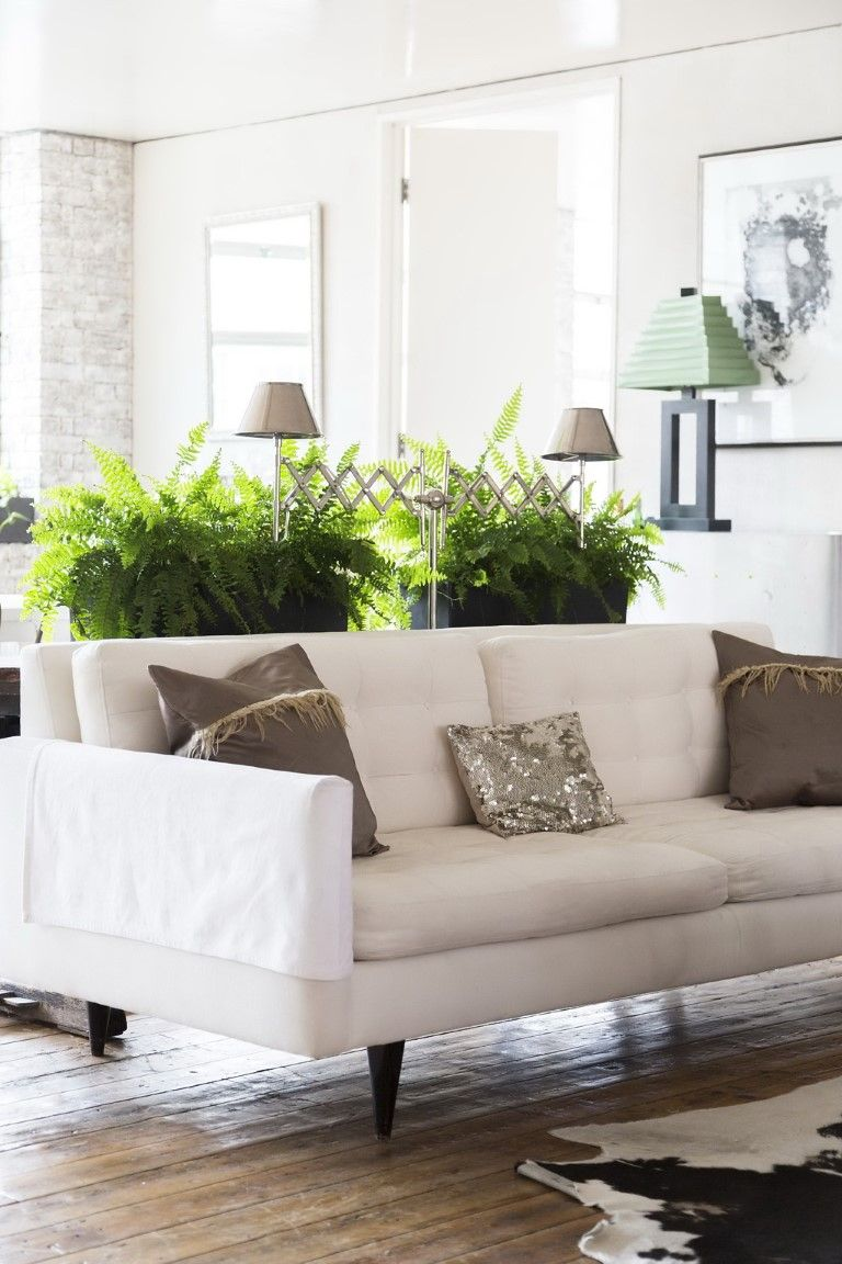 1 plantas dentro de casa no blog Detalhes Magicos