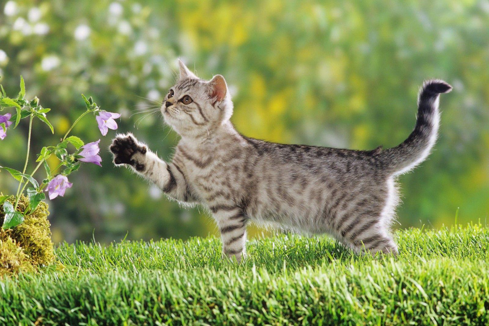 paisagens com gatos - Pesquisa Google | gatos | Pinterest | Gato
