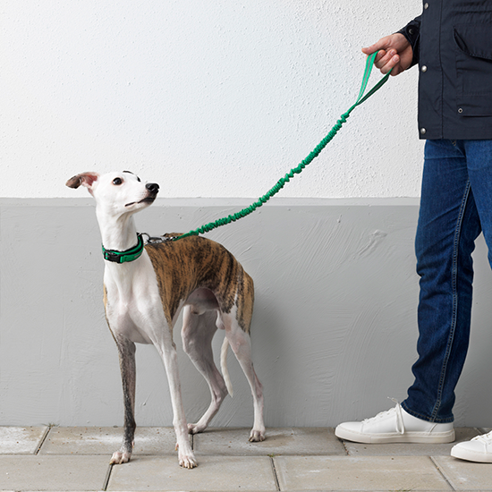 IKEA collectie speciaal voor honden en katten