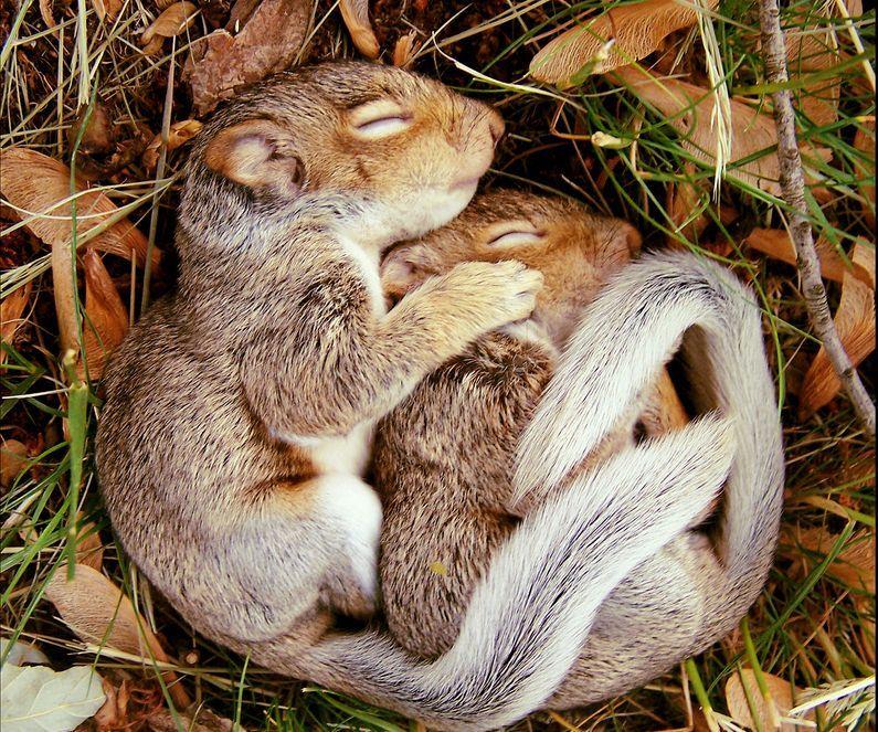 those squirrels