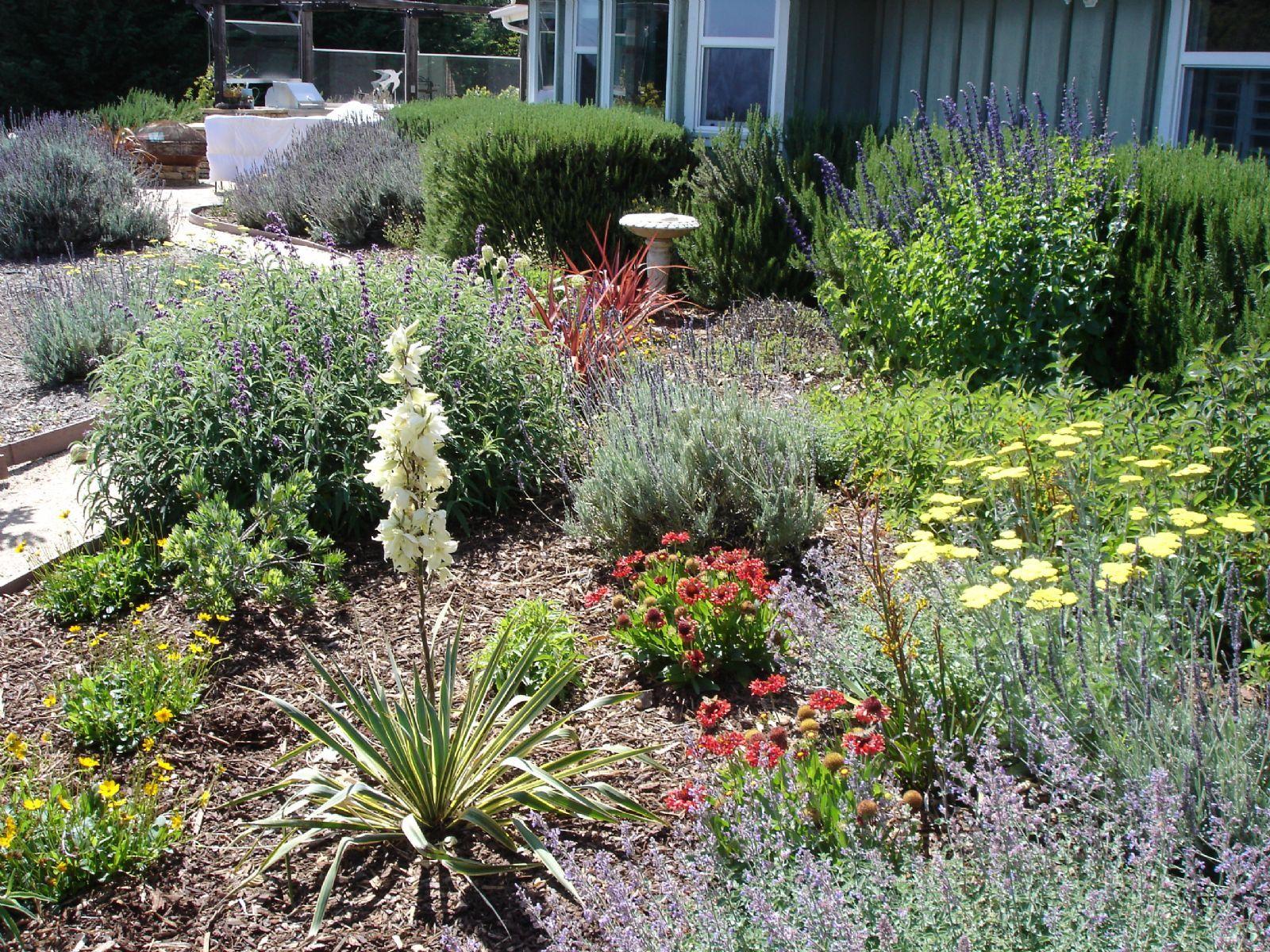 High Quality Drought Landscaping Ideas #9 Drought Tolerant Landscape ...
