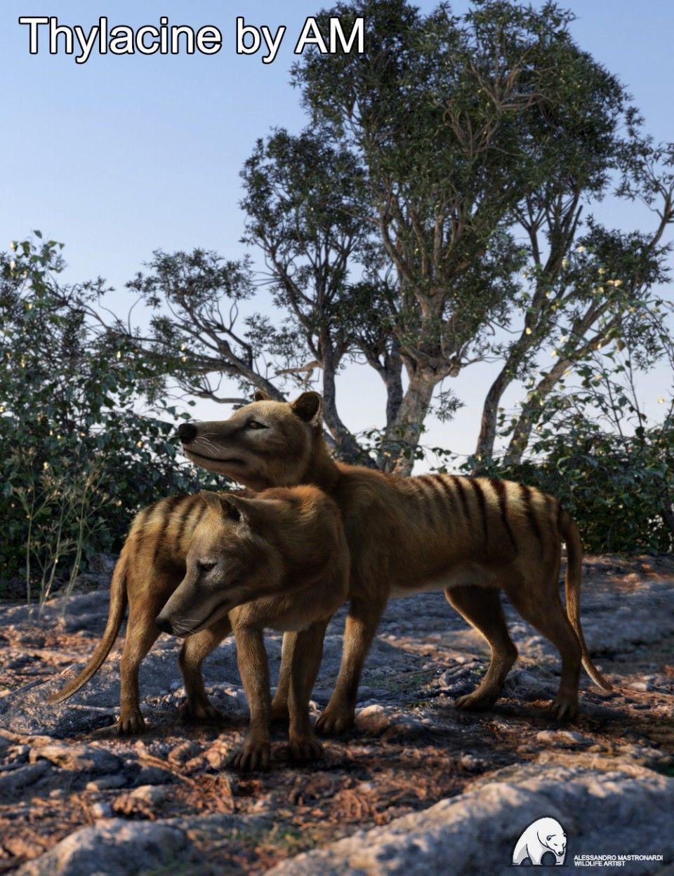 Thylacine by AM. Artist rendition of extinct animal. art