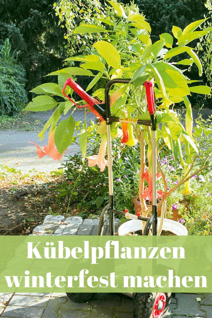 Pflanzen Uberwintern Balkon Garten Pinterest Garten Pflanzen