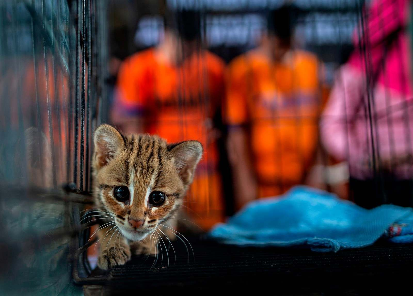 Pics A Little Leopard Saved From Smugglers Animales Fotos The Guardian