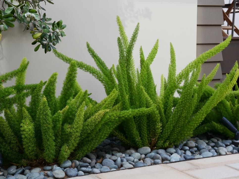 Simple, visuallyinteresting plantings are at once dynamic