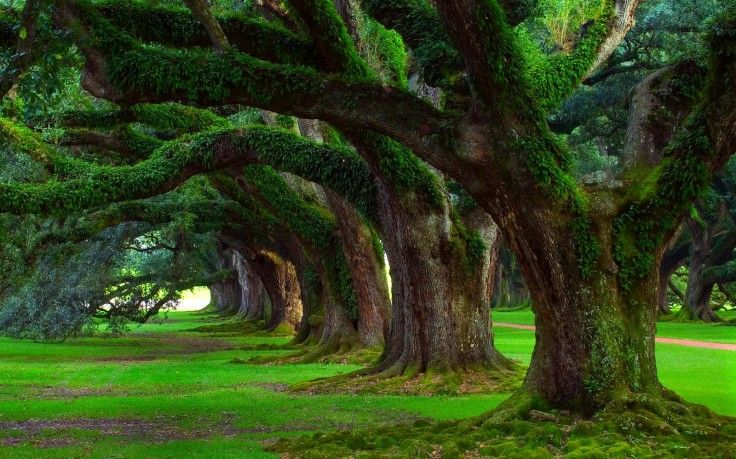Oak Trees Grass Trees Moss Green Ancient Nature Landscape Hd Wallpaper Desktop Background In 2020 Nature Tree Landscape Wallpaper Beautiful Tree