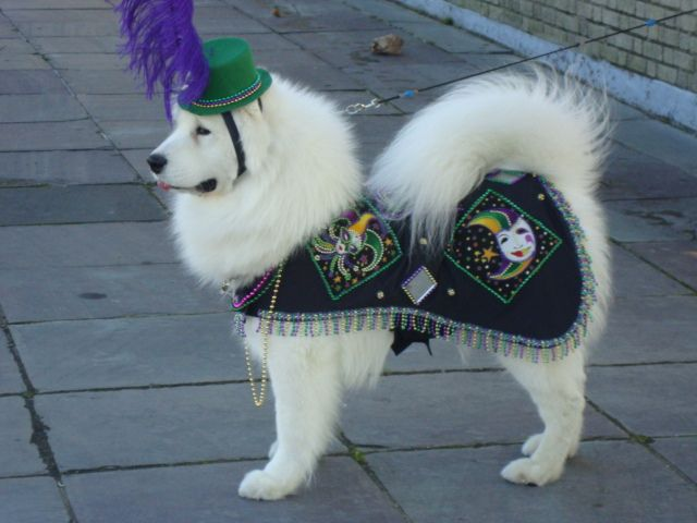 The Pet Celebration Mardi Gras Costume & The Pet Celebration Mardi Gras Costume | Masqurade what fun to dress ...