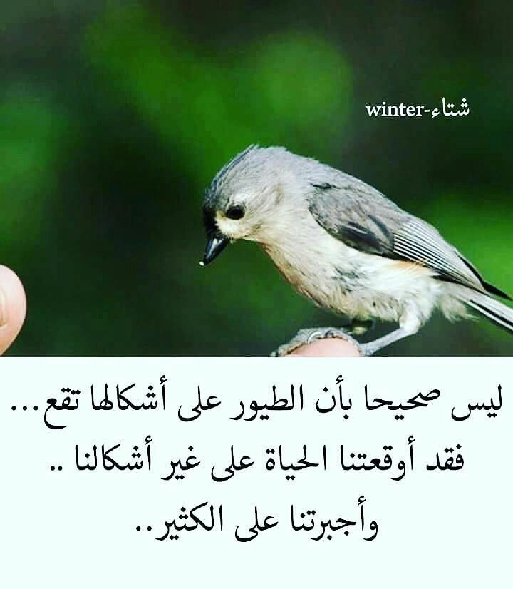 Desertrose ليس صحيحا Beautiful Words Arabic Quotes Proverbs