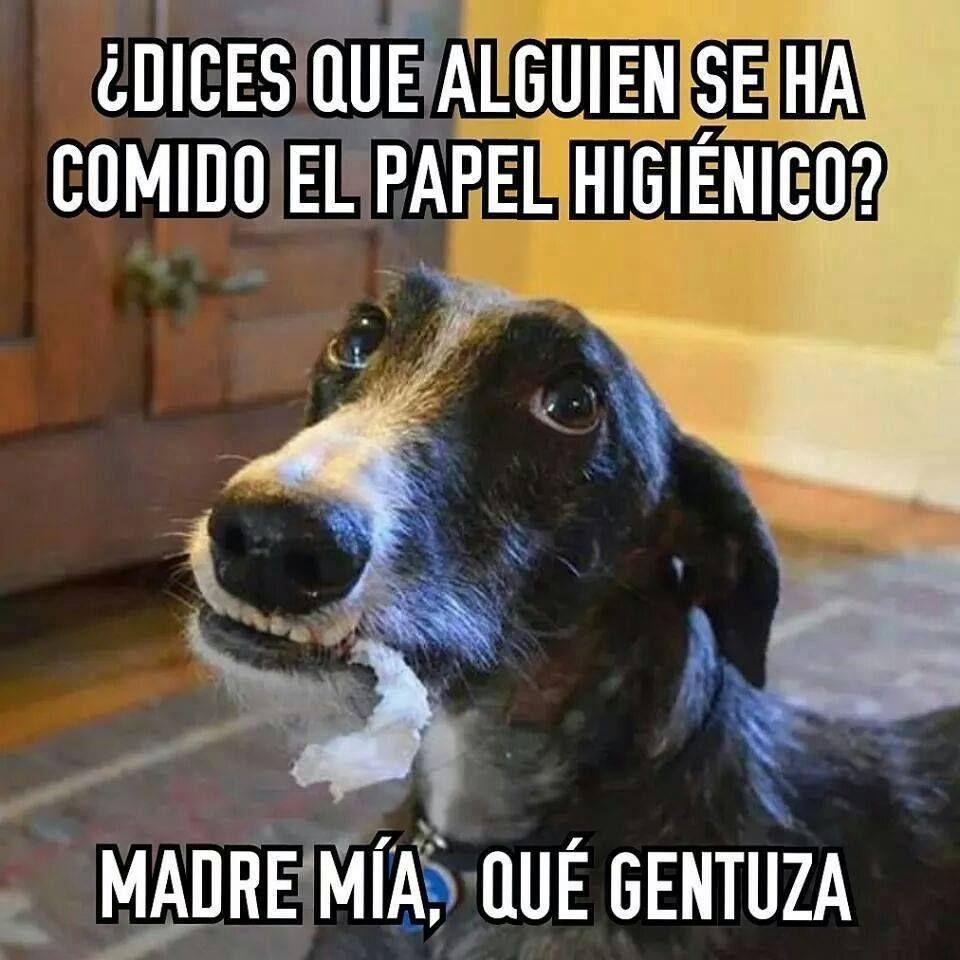 Photo of # mascotas # perros # gatos #animales #naturales #amor