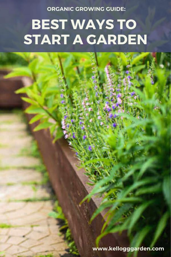 The Best Ways To Plant To Get A Great Garden Starting A Garden