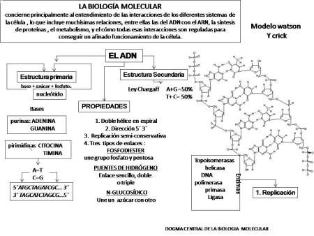 Mapa Conceptual Adn Biologia Molecular Biología Y Mapa