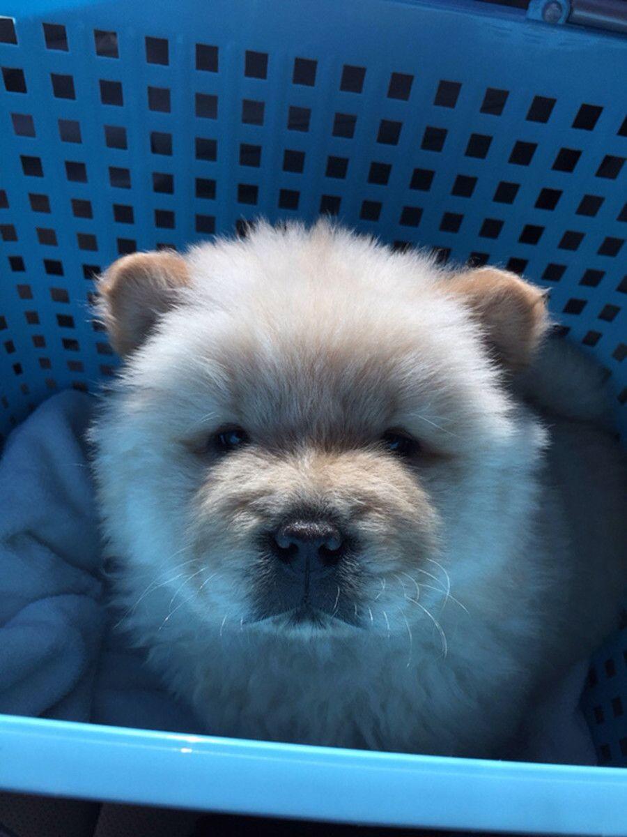 Most Inspiring Teddy Bear Chubby Adorable Dog - 01ef74f9d8d015d43fc1d067095f07ba  Graphic_532674  .jpg