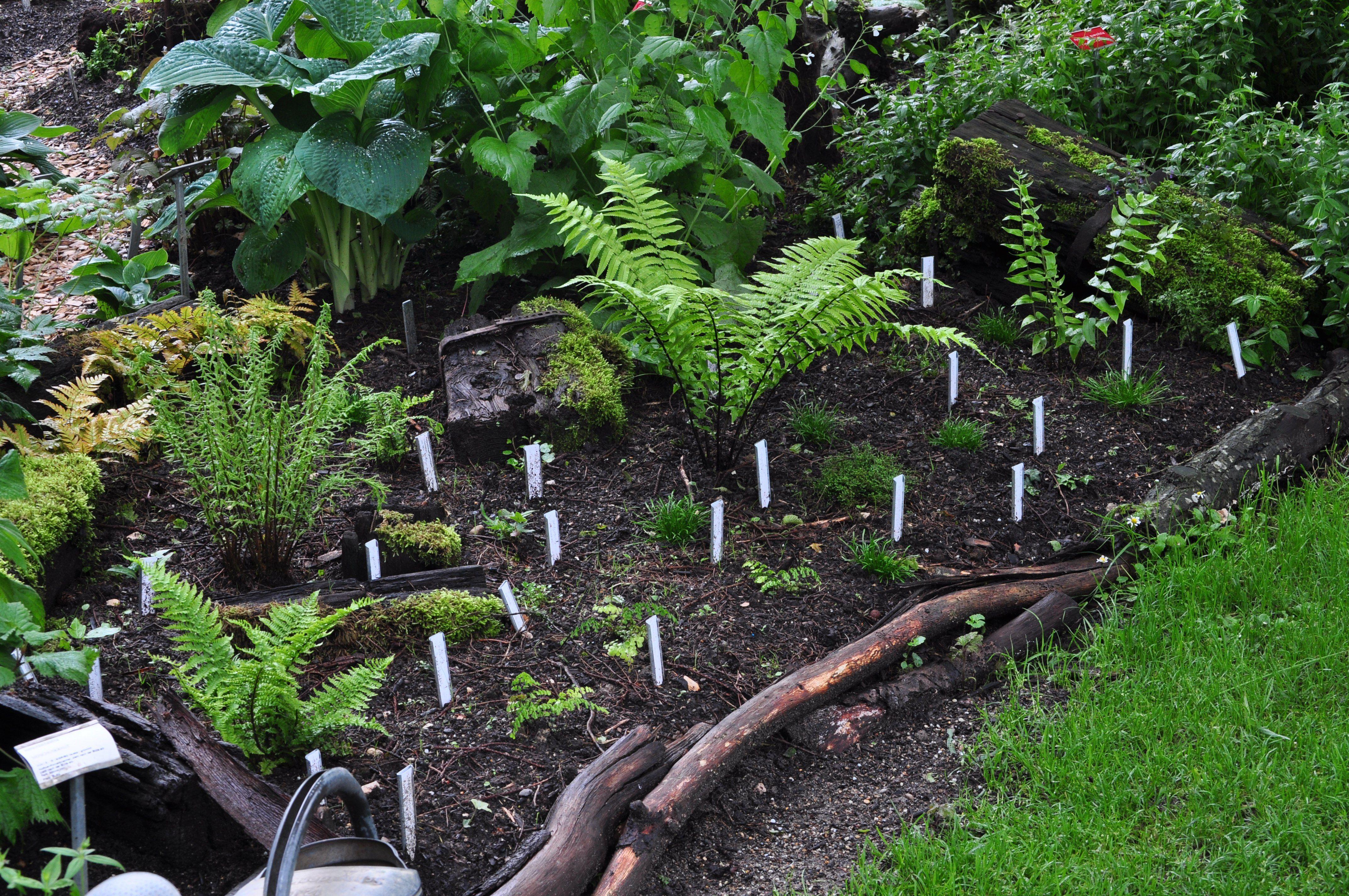 Farn Pflege Im Garten Fühlen Sie Sich Wie Ein Cottage Retreat Von