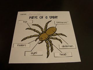 Aaaaargh Spiders Diary Of A Spider Activity Parts Of A Spider The Very Busy Spider First Grade Science