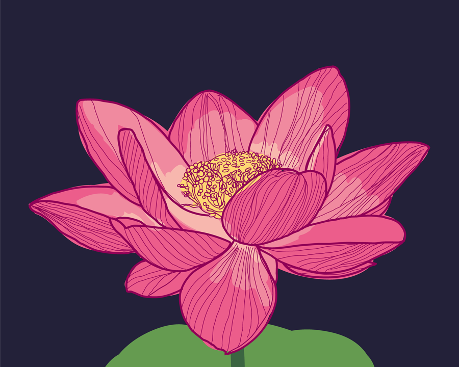 Lotus flower vector illustration Illustration, Flowers