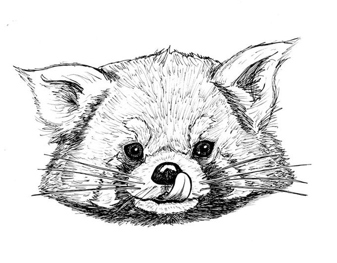 Red Panda Art Therapy Coloring Book Coloring Books Art