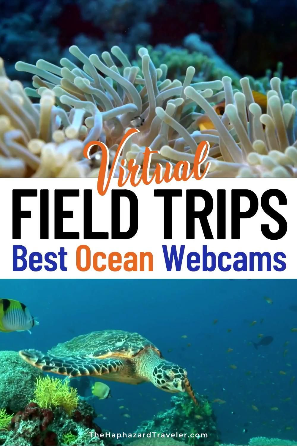 Looking for virtual field trips and ways to keep young minds busy? Take an aquarium virtual field trip with ocean live feeds & webcams! These are the best ocean virtual field trips for kids, homeschooling, and teacher resources. See jellyfish & sea otters at Monterey Bay Aquarium, penguins at Aquarium of the Pacific, manatees & corals in Florida, a kelp forest in California, Beluga whales in Manitoba, whale sharks in the Georgia Aquarium & more! #onlinelearning #homeschool #homeschoolactivities
