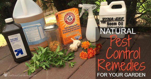 Marvelous Natural Pest Control Remedies For Your Garden | Gardens, Garden Pots And  Terraria Amazing Ideas