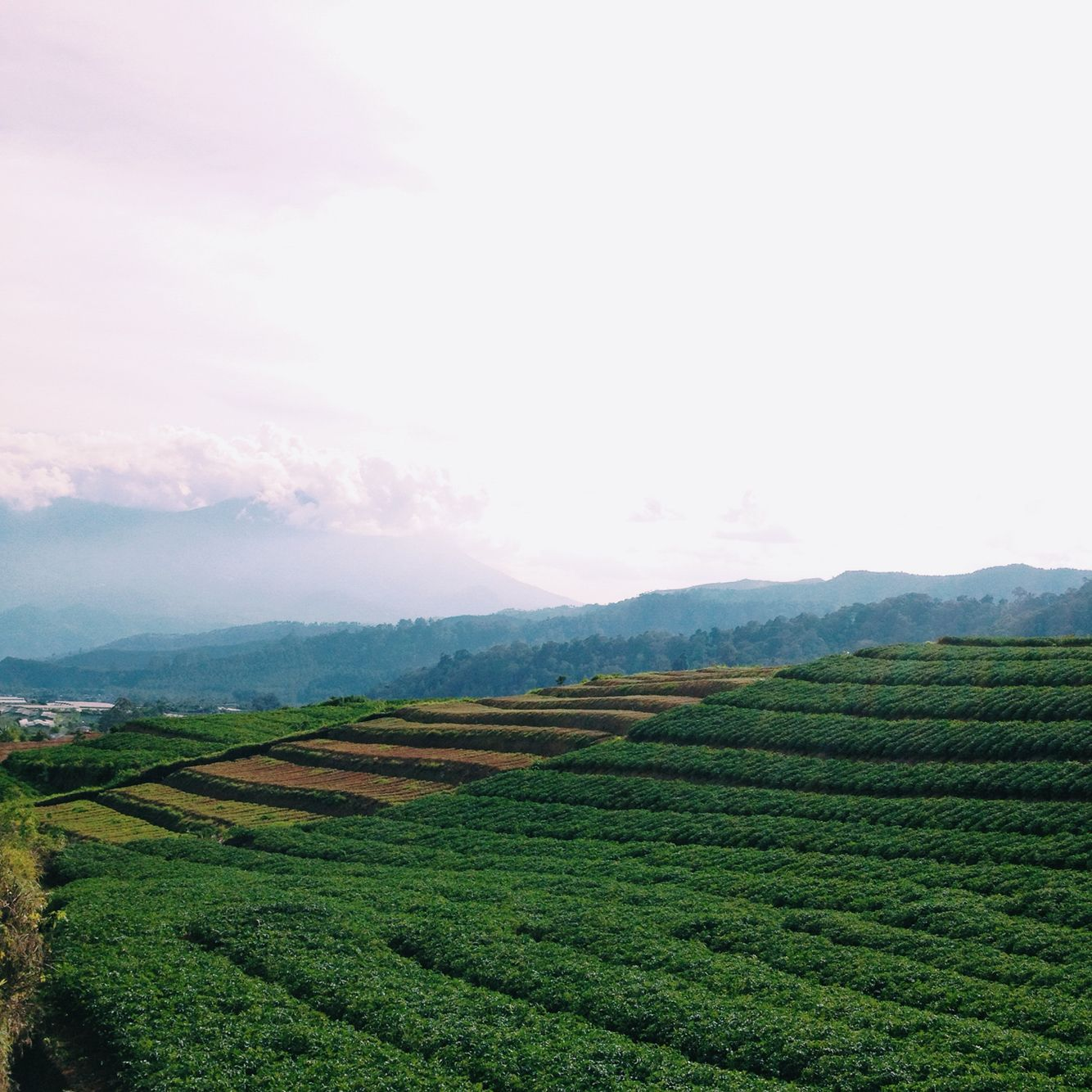 Cangar. Malang, indonesia. There was a tea garden in the