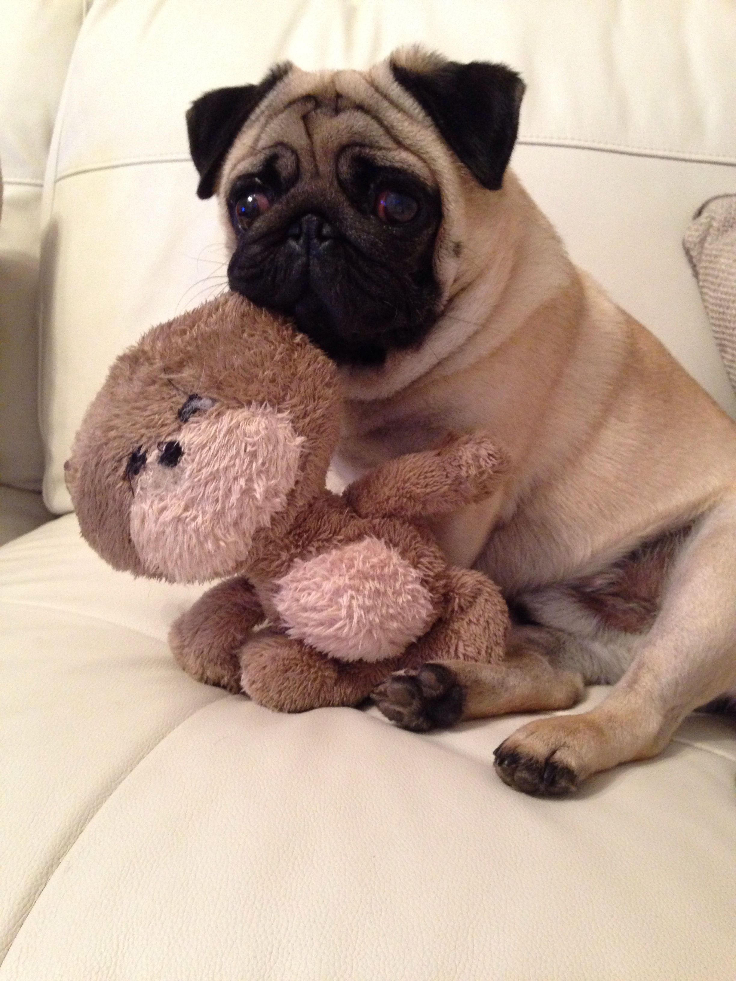 Big Ted Cute Pugs Dog Best Friend