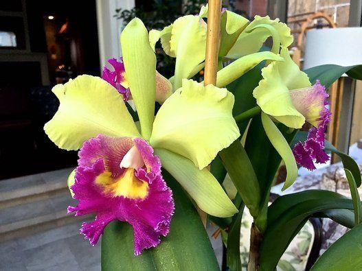 Comment cultiver et garder ses orchidées|Jean-Jacques Revel