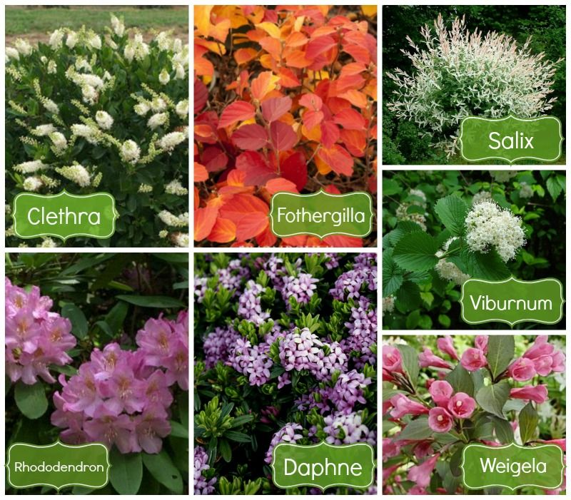 22 Tree Shade Landscaping Ideas For Your Yards: @plant_farm Shade Shrubs For The Northwest. #gardening