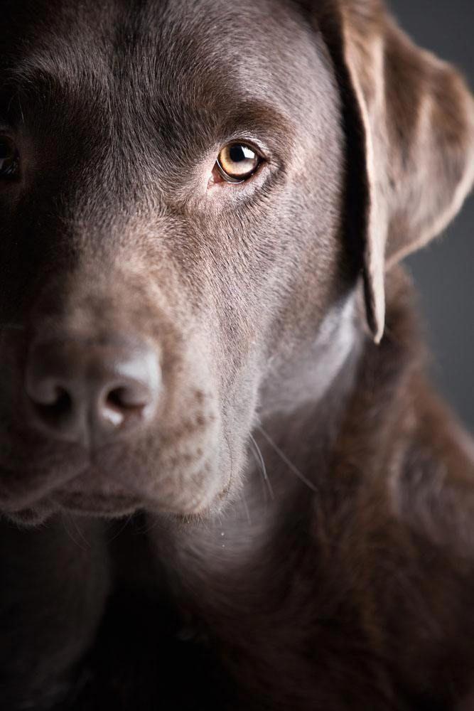 Photo of Lea este artículo para encontrar excelentes consejos sobre la propiedad del perro: información sobre el perro