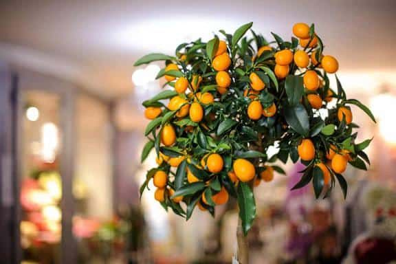 12 Fruit Trees You Can Grow Indoors For An Edible Yield In 640 x 480