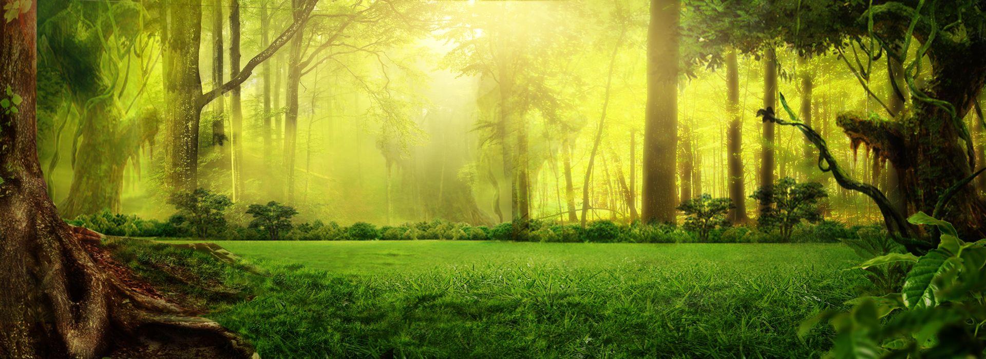 الخيال غابة أخضر الخلفية Nature Images Background Images Landscape Background
