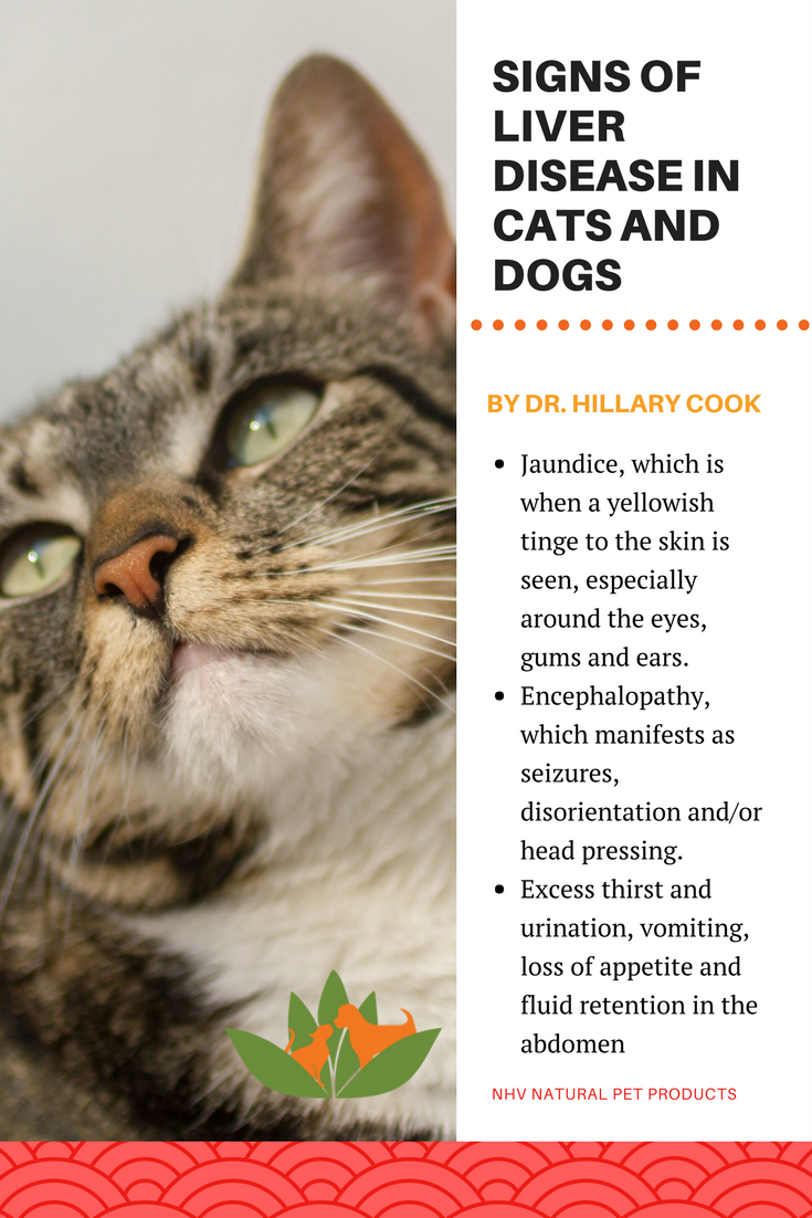 Vet Talk Liver Disease in Dogs and Cats Is Your Pet At