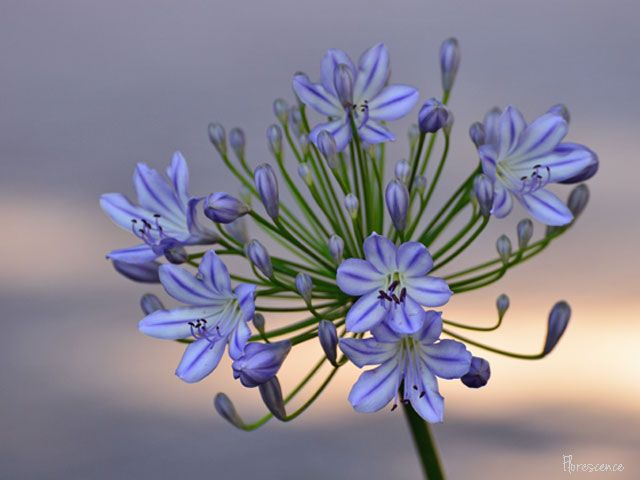 Pin On Indigenous Flowers Of South Africa