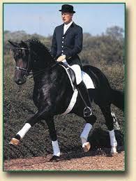 Davignon Stallion