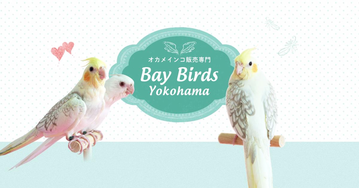 Baybirds Yokohamaは 神奈川県横浜市にあるオカメインコの販売専門店です ノーマル ルチノーをはじめ様々な種類の雛を取り揃えています オカメインコ以外の小鳥も時々販売いたします オカメインコ 横浜 優しい