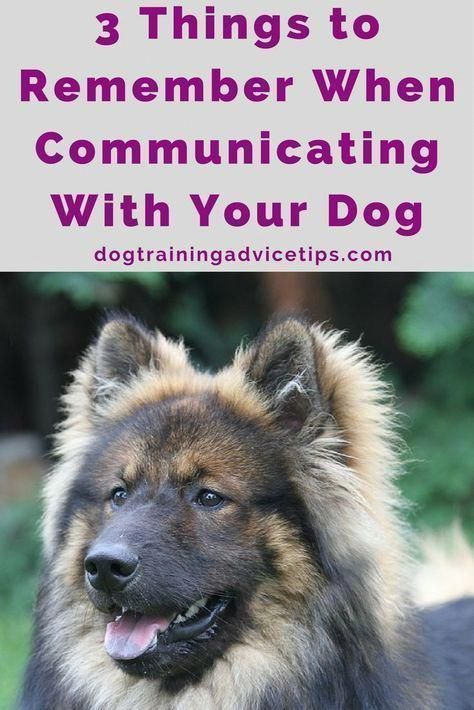 3 Things To Remember When Communicating With Your Dog Dog