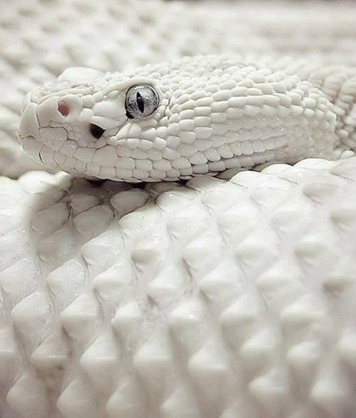 Rare Albino Animals, Animals Beautiful, Pink