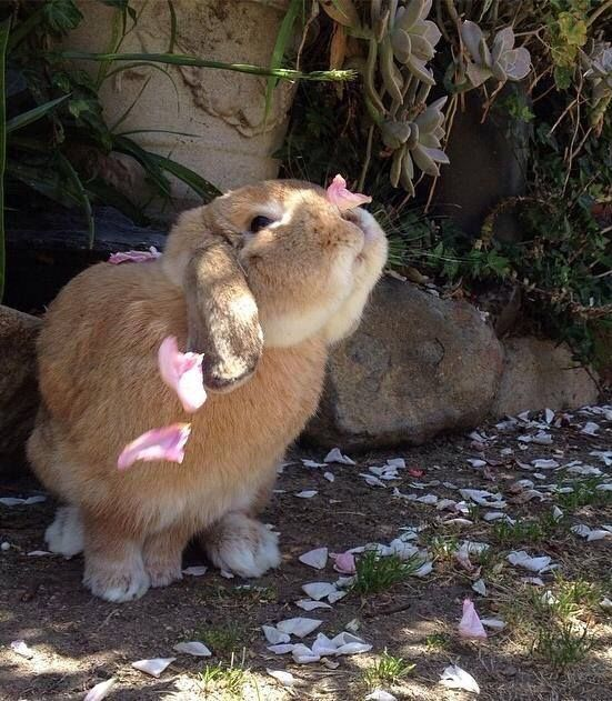 Image result for images of spring rabbits