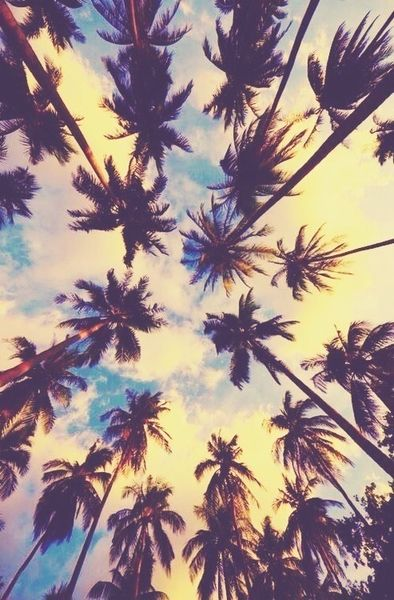 Pretty Sky And Palm Trees Image On We Heart It