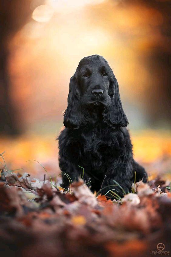 Pin Von Aleksandra Bozi Auf Hunde Hundeprodukte Coole Hunde Hunde