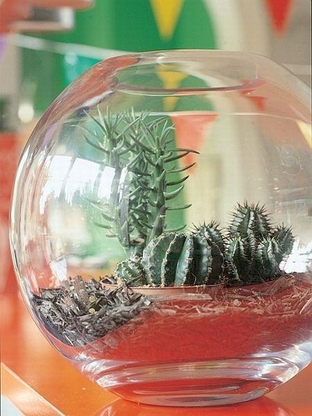 Kaktusy I Inne Sukulenty Rodzaje I Pielegnacja Artykuly Home Decor Decor Inspiration